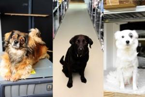 Tierische Mitarbeiter - Die drei Bürohunde